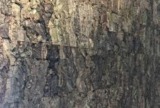 Raw Virgem Bark
